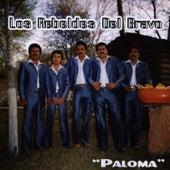 Paloma by Los Rebeldes del Bravo