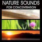 Nature Sounds for Concentration, Studying, Better Learning, Help Paying Attention, Reading, Stimulate Memory. Sounds of Nature Study Music by Nature Sounds for Concentration