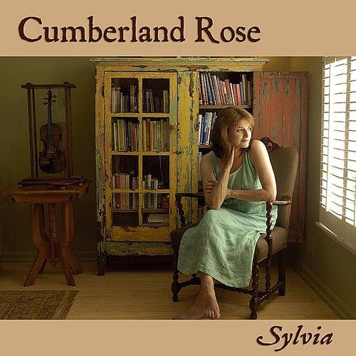 Cumberland Rose by Sylvia