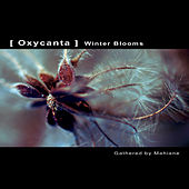 OXYCANTA - Winter Blooms by Various Artists