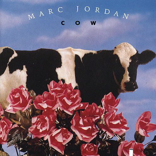 Cow by Marc Jordan