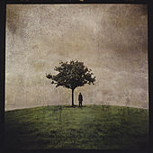 The Burial Tree (II) by Ana Kefr