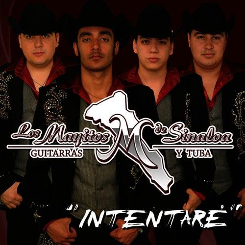 Intentaré by Los Mayitos De Sinaloa