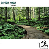 Sounds Of Nature by Art World Music