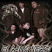 El Gallo Negro by MVP