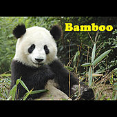 Bamboo by Tiger Room