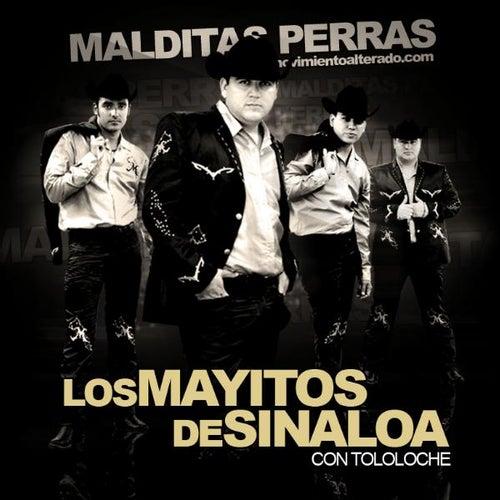 Malditas Perras - Con Tololoche (En Vivo) by Los Mayitos De Sinaloa