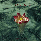 Lotus by Stephanie Sante
