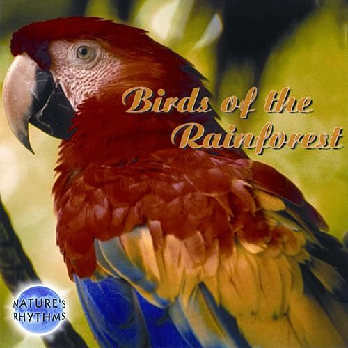 Nature's Rhythms: Birds of the Rainforest by Nature's Rhythms