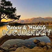 Nature & Wildlife Documentary (Music for Documentaries, Ambient, World Music, Landscapes, New Age) by Various Artists