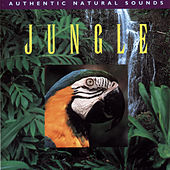 Jungle by Sounds Of Nature
