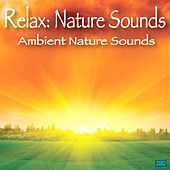 Ambient Nature Sounds by Relax: Nature Sounds
