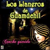 Concha Querida by Los Llaneros De Guamuchil