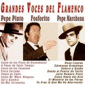 Grandes Voces del Flamenco by Various Artists
