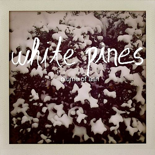 Plume of Ash by White Pines