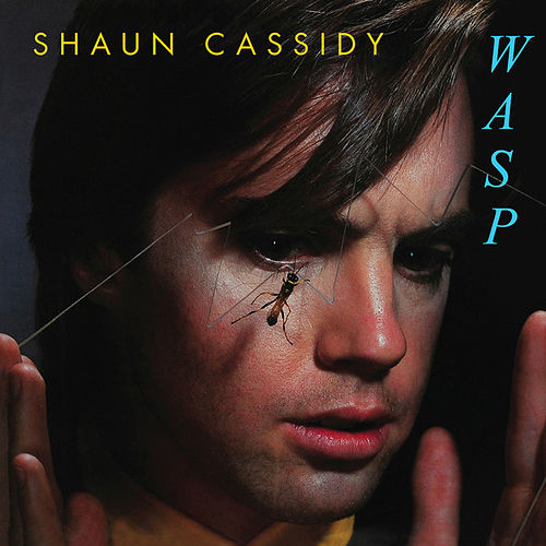 Wasp by Shaun Cassidy