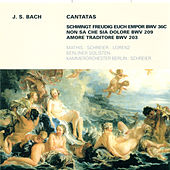 Bach: Cantatas - BWV 36c, 203, 209 von Various Artists