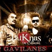Gavilanes by Los Buknas De Culiacan