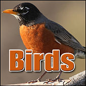 Birds: Sound Effects by Sound Effects Library