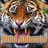 Wild Animals: Sound Effects by Sound Effects Library