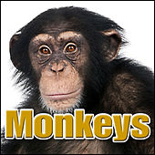Monkeys: Sound Effects by Sound Effects Library