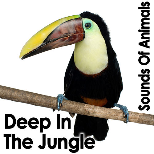 Sounds Of Animals: Deep In The Jungle by Dr. Sound Effects SPAM