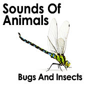 Sounds Of Animals: Bugs And Insects by Dr. Sound Effects SPAM