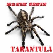 Tarantula by Maxim Senin