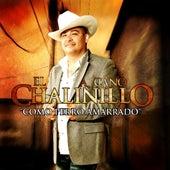 Como Perro Amarrado by El Chalinillo
