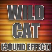 Wild Cat by Sound Effect