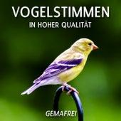 Vogelstimmen in hoher Qualität by Vogelstimmen