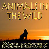 Animals In The Wild - 100 Authentic Atmospheres of Europe, Asia & North America by Dr. Sound Effects SPAM