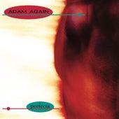 Perfecta by Adam Again (1)