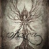 Acera by Acera