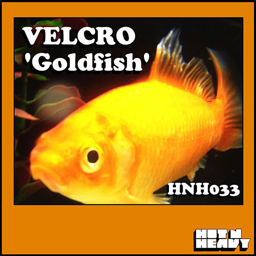 Goldfish by Velcro