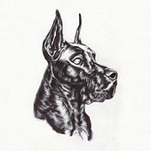 Alpha Dog by Great Dane
