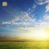 Morning Glory by Babak Shayan