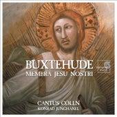 Buxtehude: Membra Jesu Nostri by Cantus Cölln and Konrad Junghänel