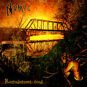 Recrudescent Feed by Numic